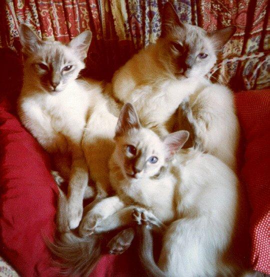 I tre mici di Leo e Marilena.